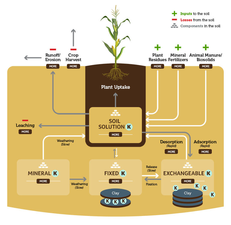 The Potassium Cycle and The Importance of Potassium fertilizer
