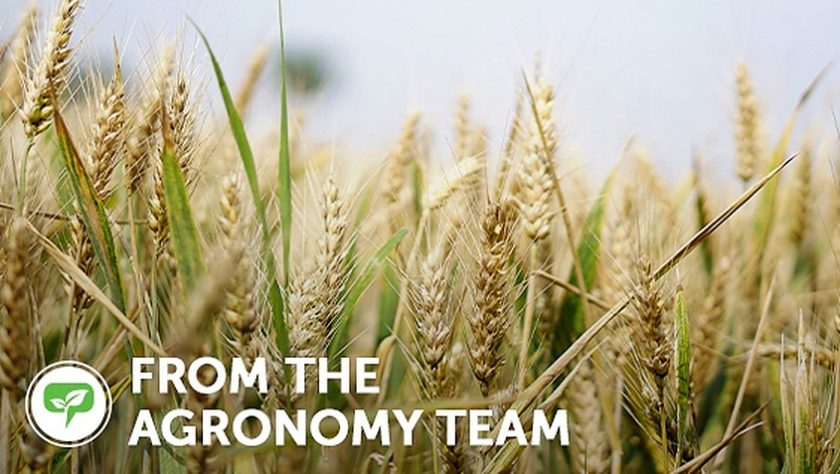 from the ag team wheat