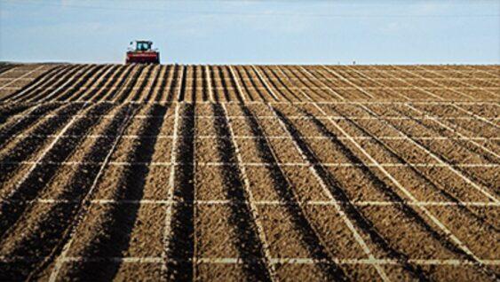 The Economic Return to Soil Test Information