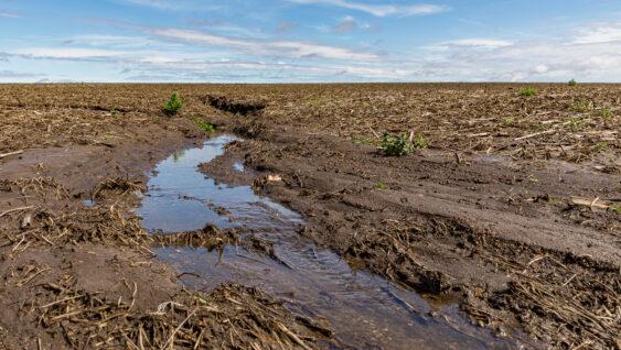 Phosphorus loss in crop soil