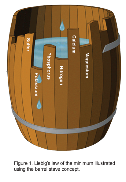 Liebig's law of the minimum classic stave barrel example