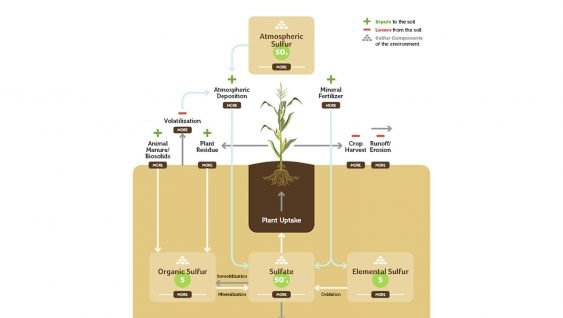 Sulfur Transformation in Soils
