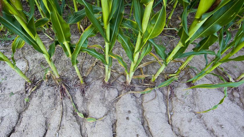 Adequate Soil Fertility