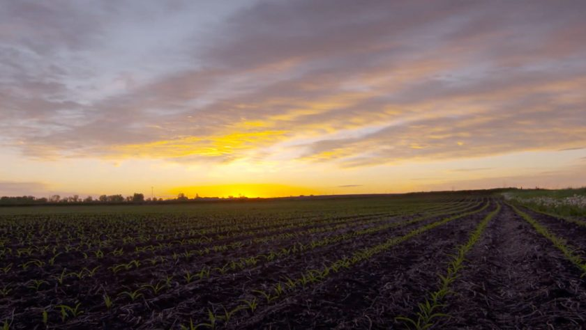 Key Growing States See Declining Soil Potassium Levels