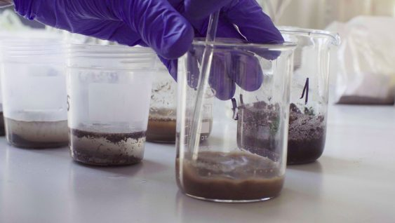 Hands of a scientist mixing samples of the soil
