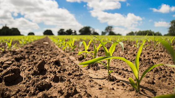 The nitrogen cycle in the soil growing new crops