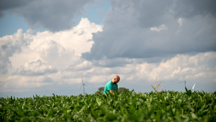 Man in dense soybean field. Examining plants for nutrient deficiency. cloudy blue sky.